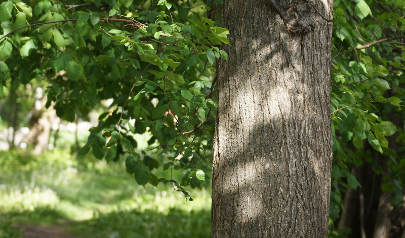 Всквере поЯрмарочному проезду разобьют газон ипосадят деревья за12млн рублей